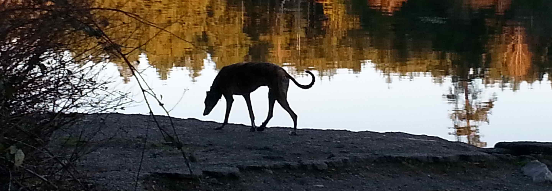 Dog by lake