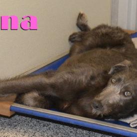 Luna (Juniper)