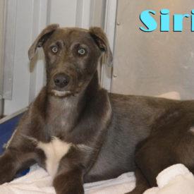 Sirius (nka Grover)
