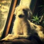 Brienne (NKA Dolly)
